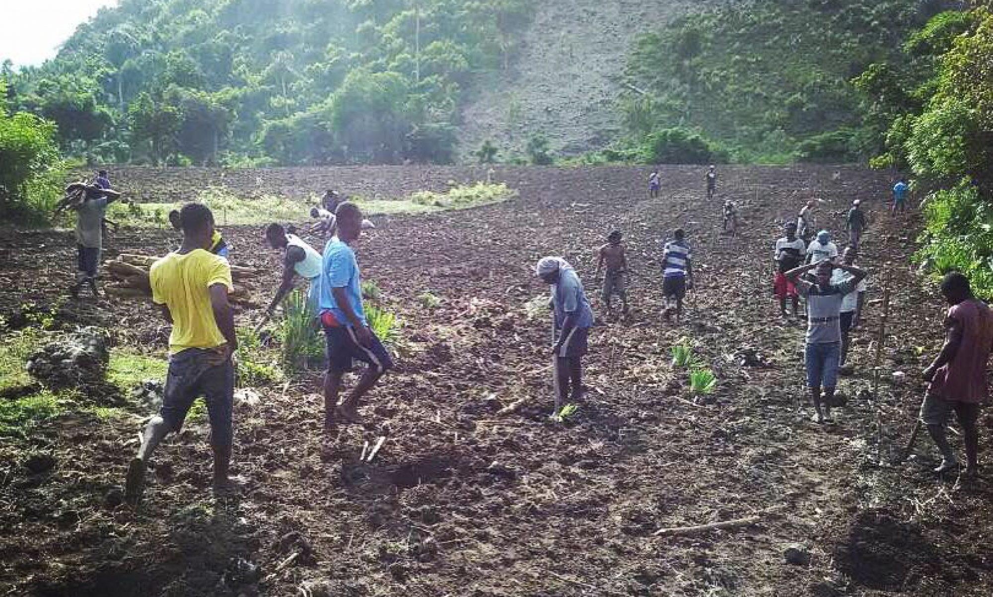 haitian farmers